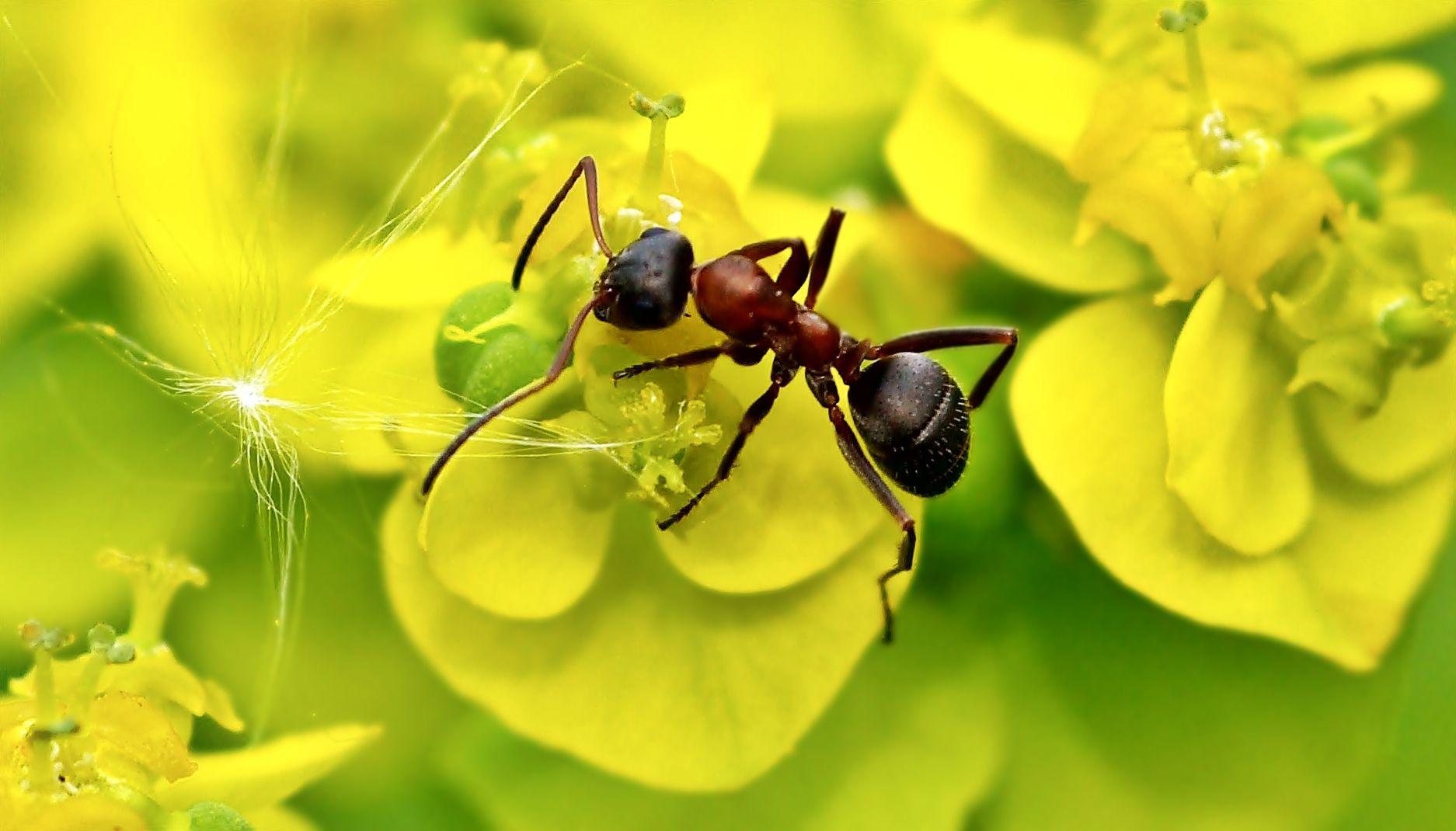 Ameisen im Garten: Was gegen ungebetene Krabbler hilft ...