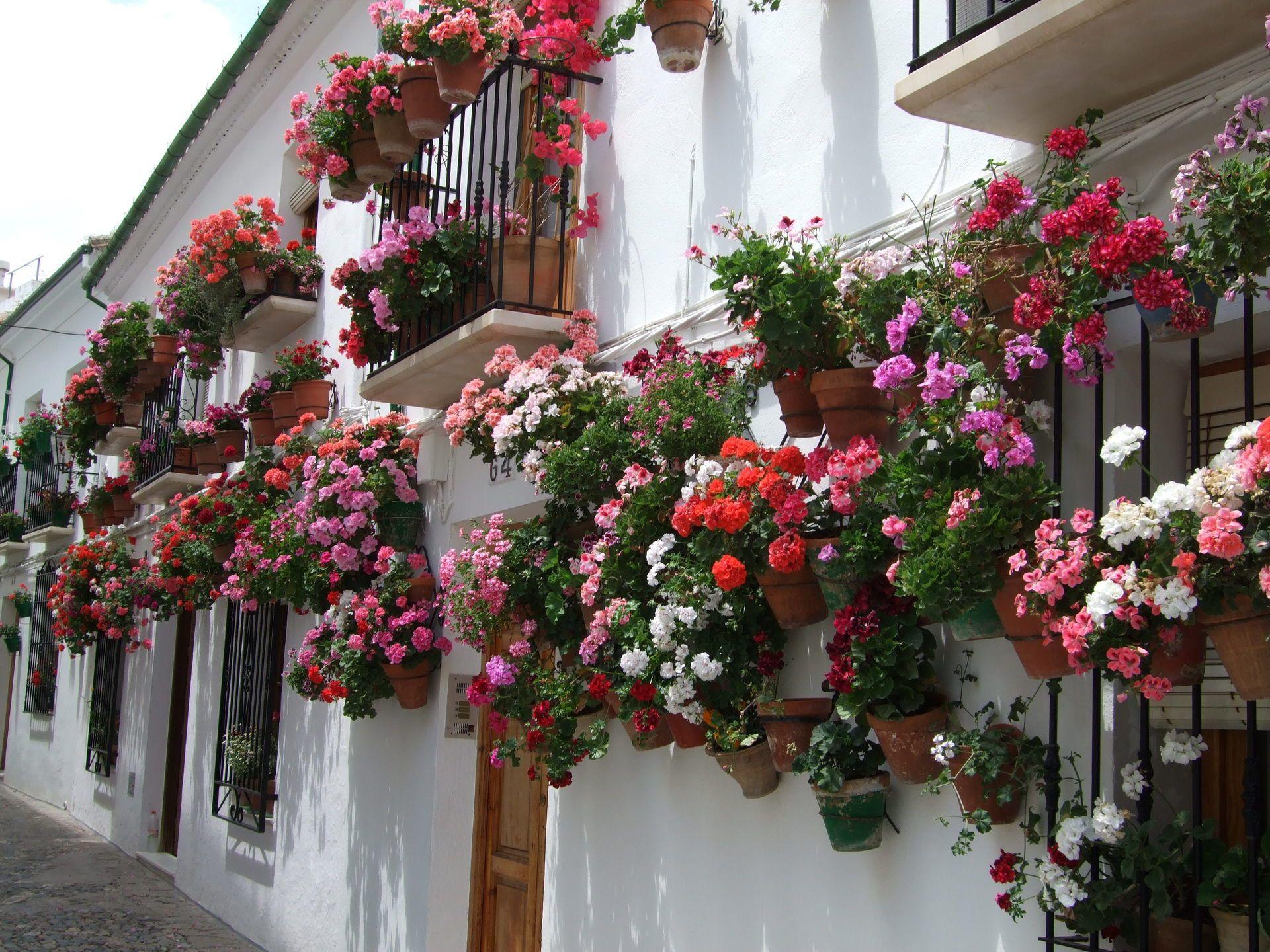 Der Sonnen Balkon Blumen Fur Balkonkasten Kubel Und Co