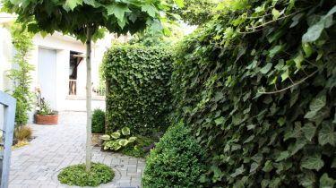 Hecken schneiden im winter for Gartengestaltung thuja